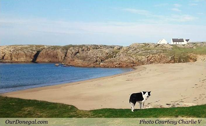 A Friendly Collie Dog On Cruit Island Co Donegal, Ireland (Photo Courtesy Charlie V)